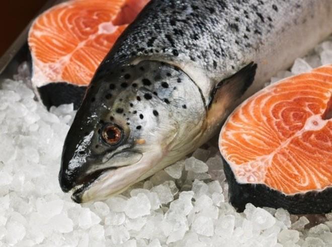 Cá hồi sống ở đâu? Môi trường nước nào thực sự tốt cho sinh sản?