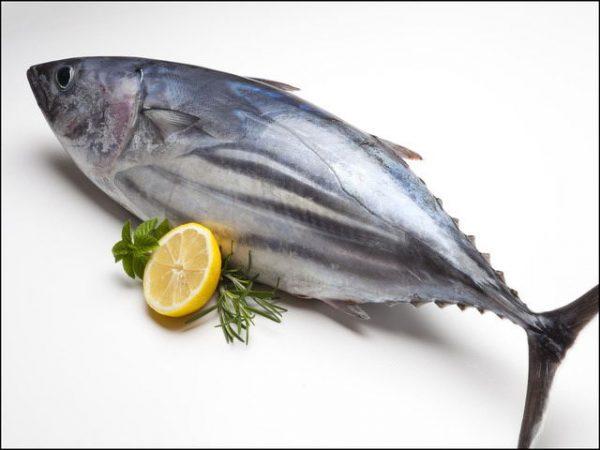 cá ngừ đại dương làm món gì ngon