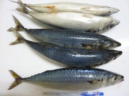Cách làmmón cá ngừ hấp cuốn bán tráng